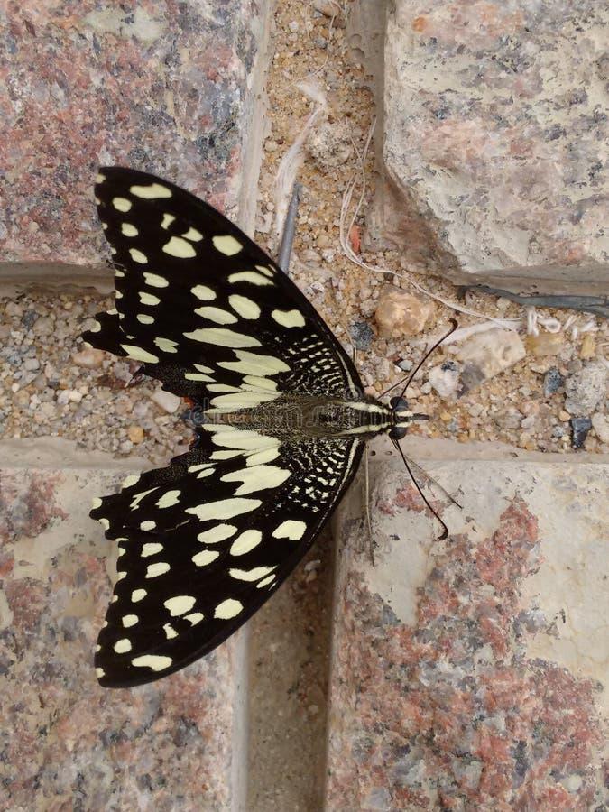 Цвета бабочки природы стоковые фотографии rf