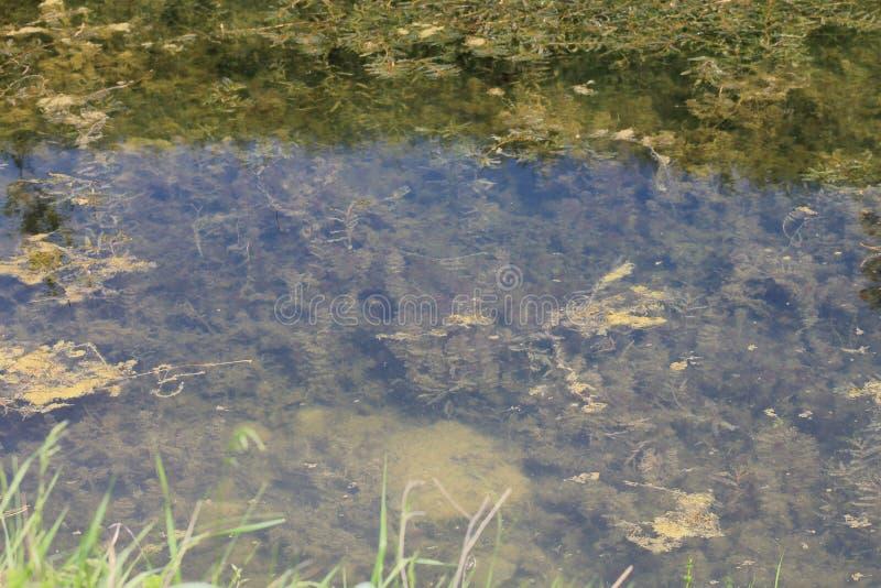 Цвета болота и желтые зеленые водоросли в болоте стоковое изображение
