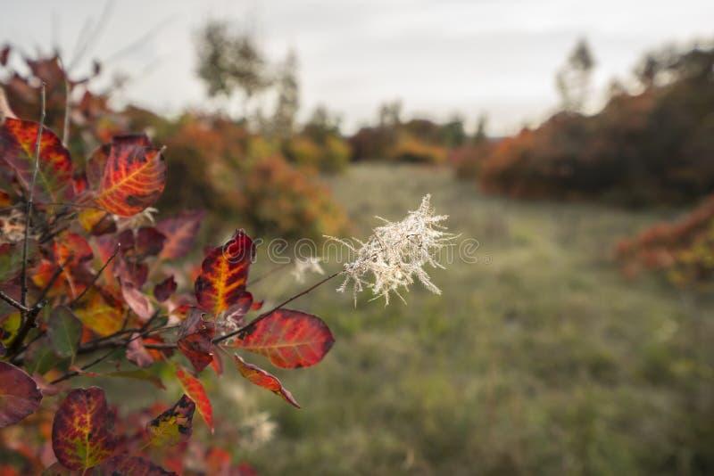 Цвета вегетации в осени стоковое изображение rf