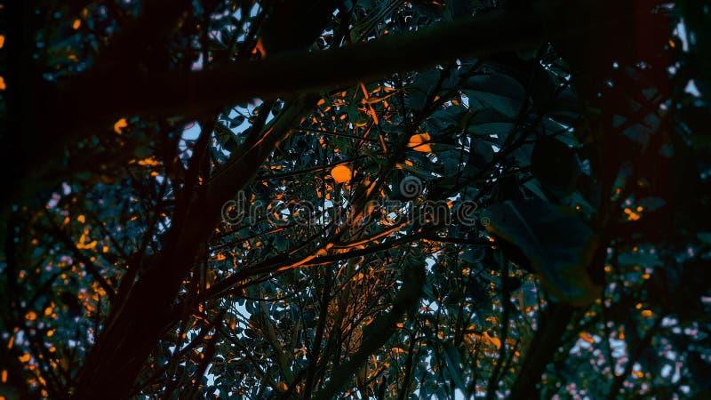 Цвета дерева стоковое изображение