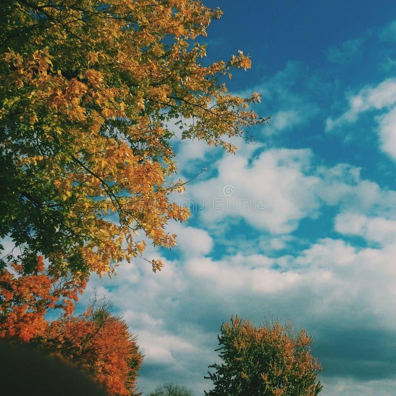 Цвета дерева падения стоковое фото