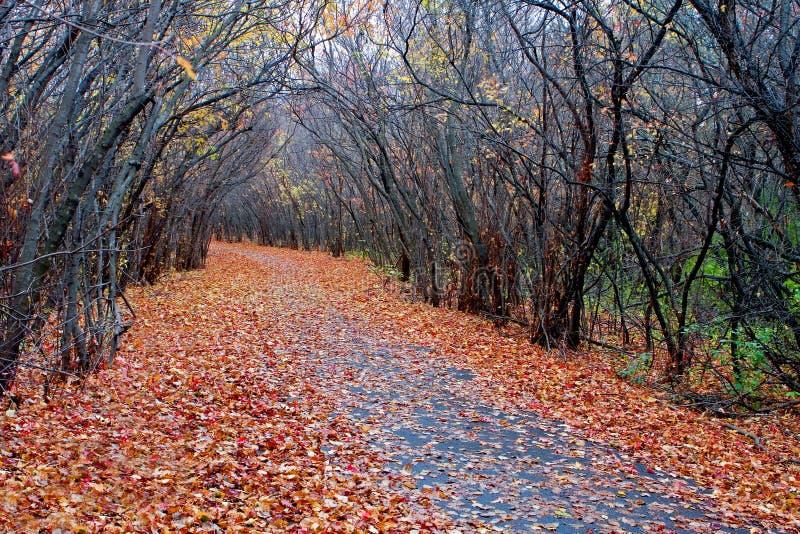 Цвета леса осенью в hdr стоковые фото