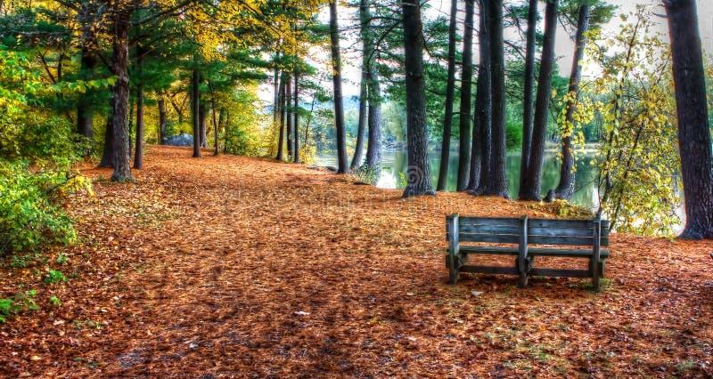 Цвета леса осенью в hdr стоковые фотографии rf