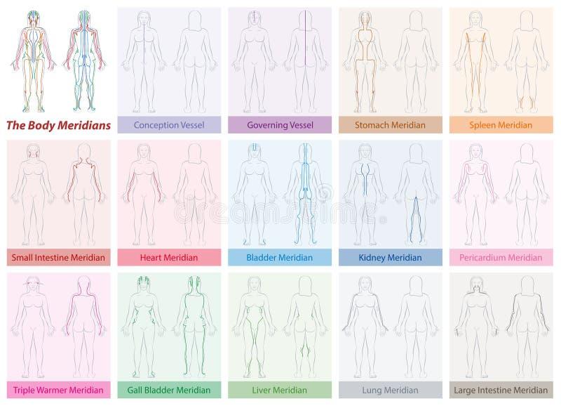 Цвета женщины диаграммы меридианов тела иллюстрация штока