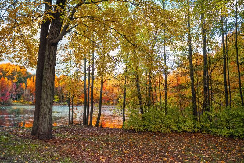 Цвета земли озера стоковое фото rf