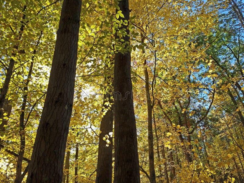 Цвета листопада Новой Англии стоковые изображения
