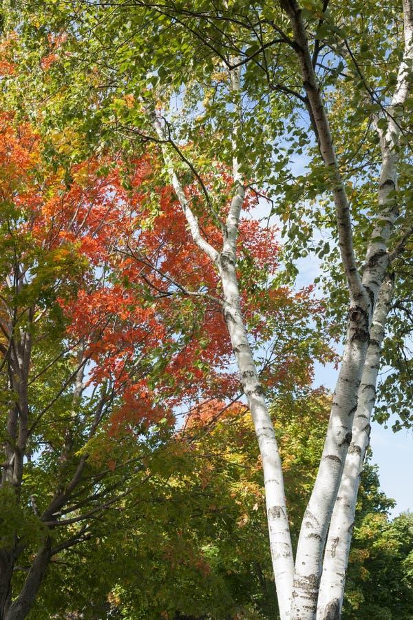 Цвета лист осени стоковое изображение rf