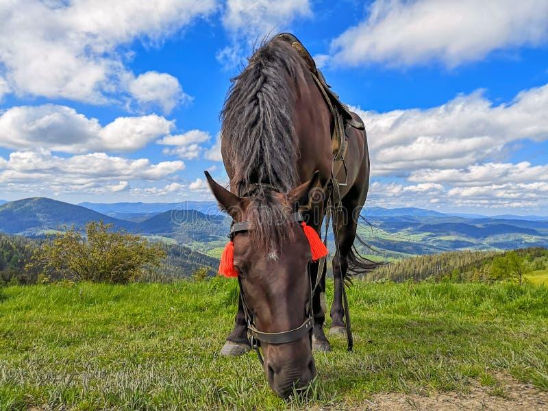 цвета Ладон лошадь пася в высоких высокогорных лугах против красивого ландшафта стоковое изображение rf