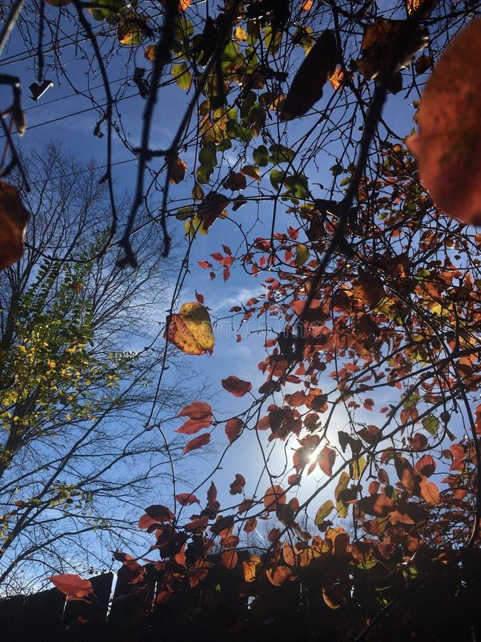 Цвета лист падения стоковое изображение