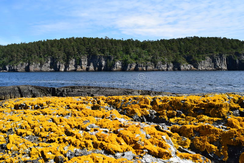 Цвета моря стоковое изображение