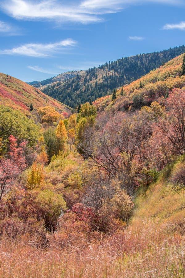 Цвета осени в каньоне в горах стоковое изображение
