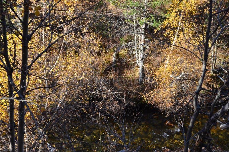 Цвета осени в смешанных лесах природного парка Posets-Maladeta, испанского языка Пиренеи стоковое изображение rf