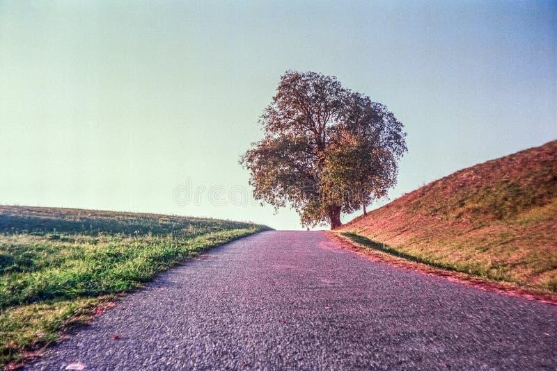 Цвета осени и сиротливое дерево в швейцарских полях и сельская местность с сетноой-аналогов фотографией - 3 стоковая фотография