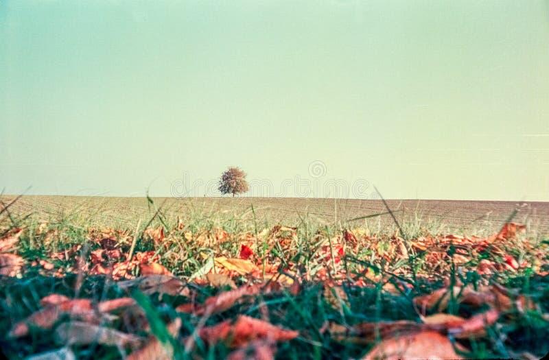 Цвета осени и сиротливое дерево в швейцарских полях и сельская местность с сетноой-аналогов фотографией - 4 стоковая фотография