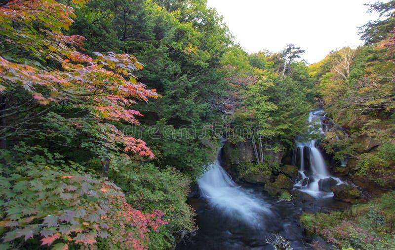 Цвета осени на тазе водопада Ryuzu в Nikko, префектуре Tochigi, Японии стоковое изображение
