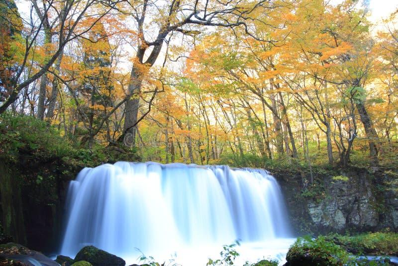 Цвета осени потока Oirase стоковые изображения