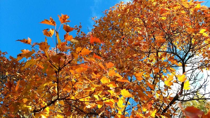 Цвета осени стоковая фотография rf