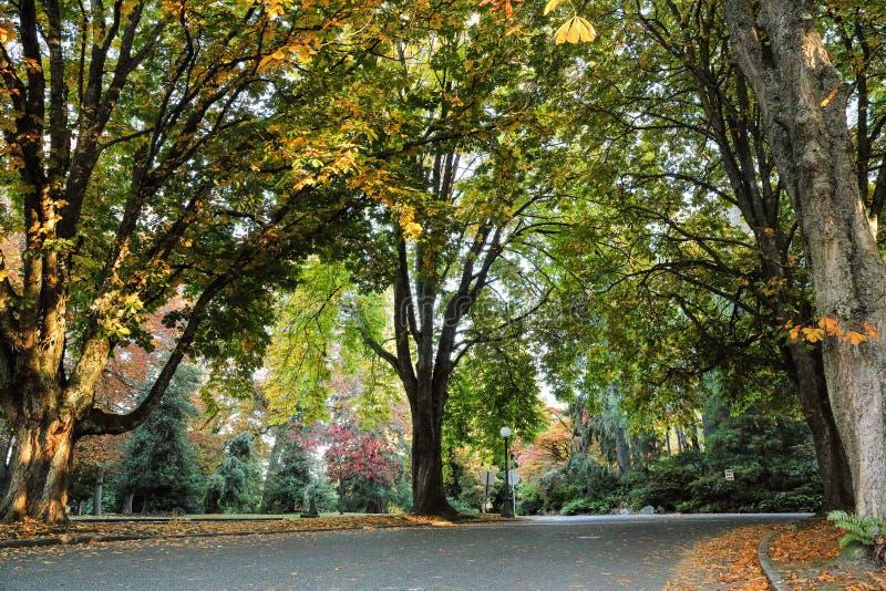 Цвета падения на добровольный парк, Сиэтл Вашингтона стоковая фотография rf