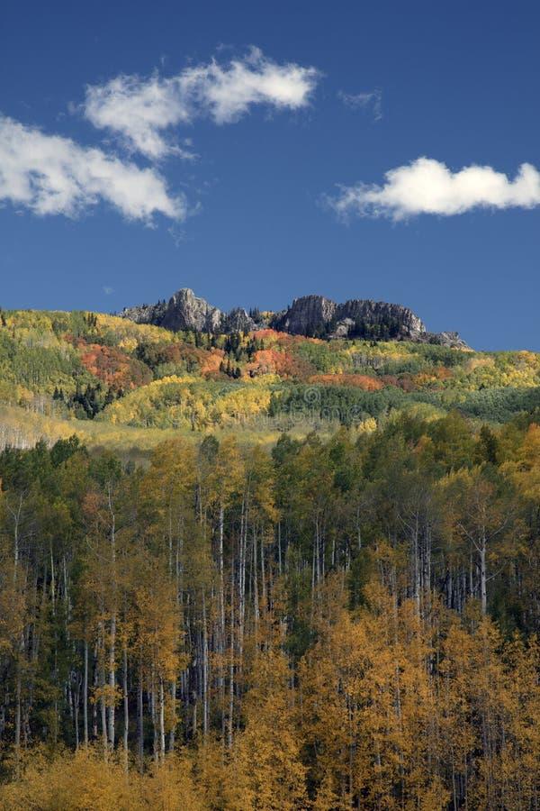 Цвета падения осени рощ Aspen в Kebler проходят около Crested Butte Колорадо Америки Листва осин поворачивает к желтому цвету и и стоковая фотография rf