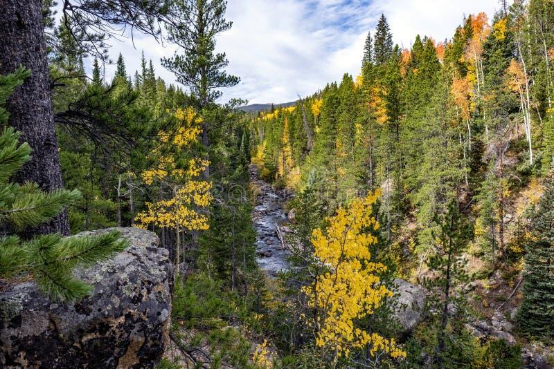 Цвета падения реки Poudre по мере того как осины начинают изменять цвета стоковые изображения rf