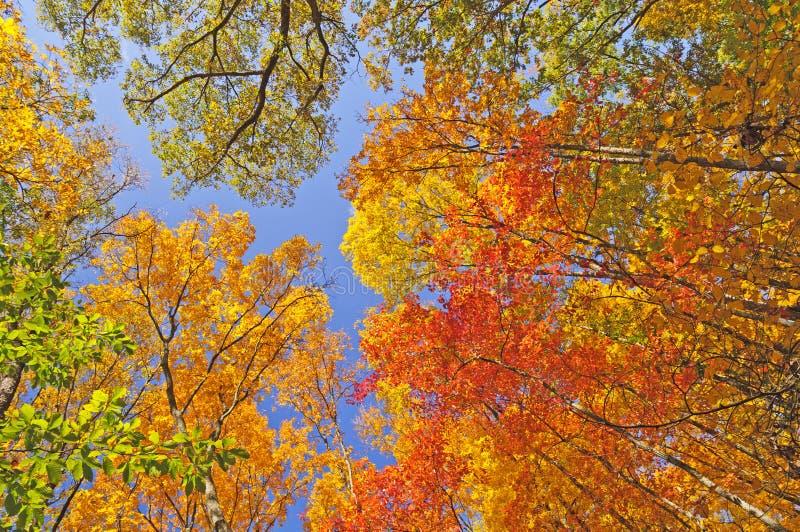 Цвета падений в пологе леса стоковое фото