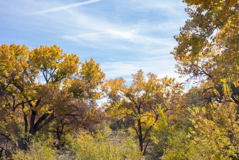 Цвета падения в Альбукерке Неш-Мексико стоковое изображение