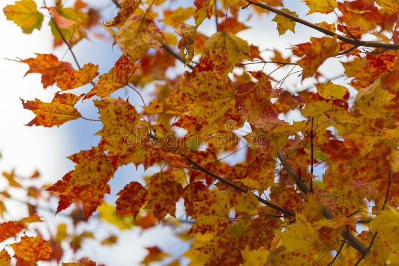Цвета падения, парк Mikisew захолустный стоковые изображения