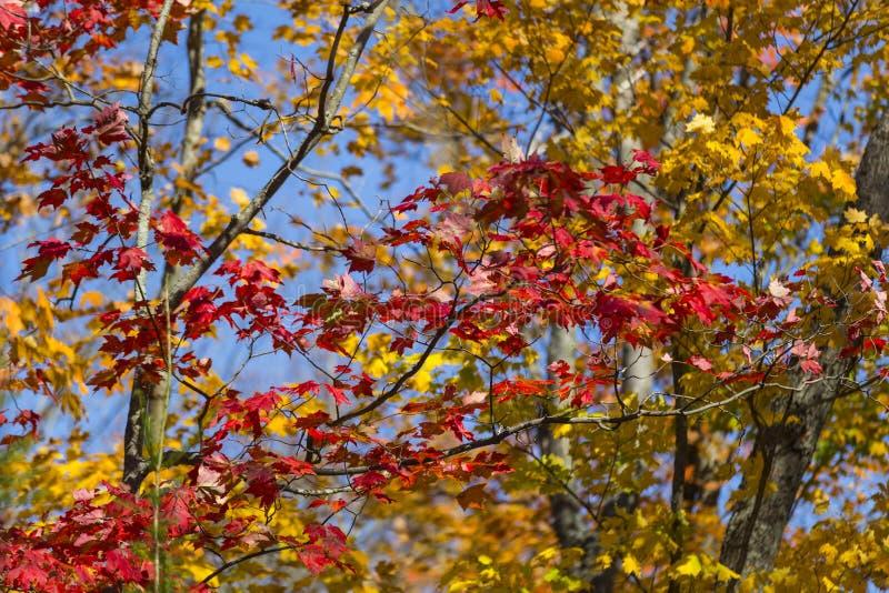 Цвета падения, парк Mikisew захолустный стоковое фото