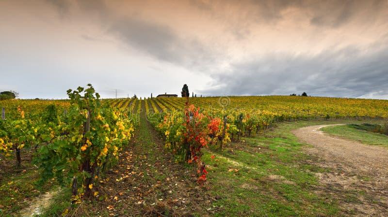 Цвета сезона осени на тосканских виноградниках в регионе Chianti около Флоренс стоковые изображения rf