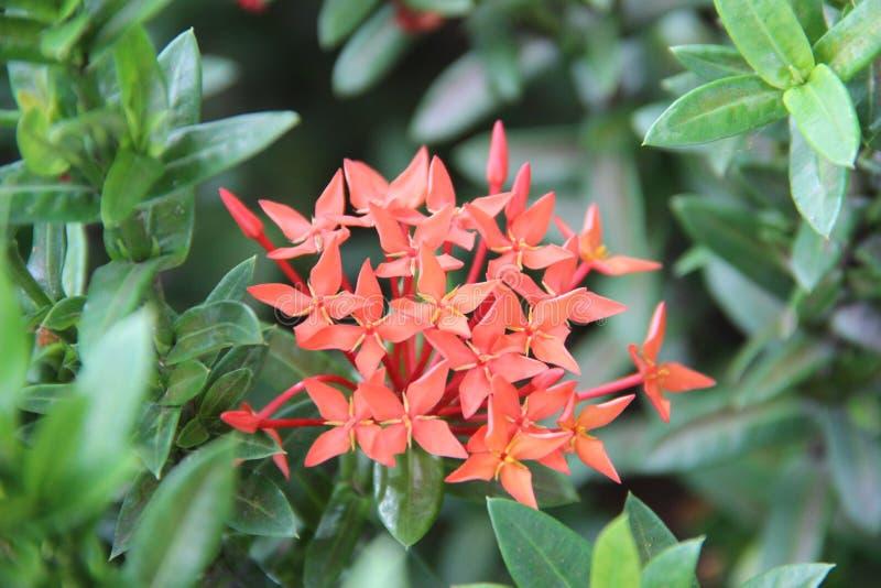 Цвета цветка весны стоковые изображения