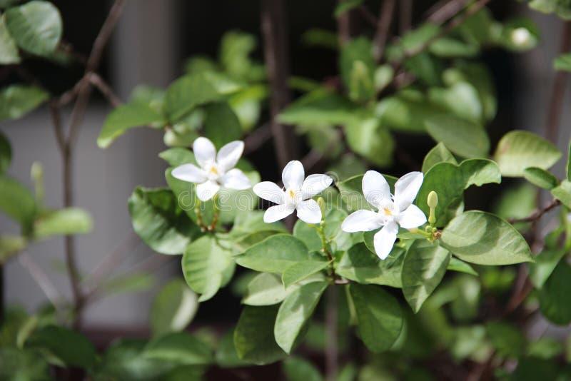 Цвета цветка весны стоковое фото