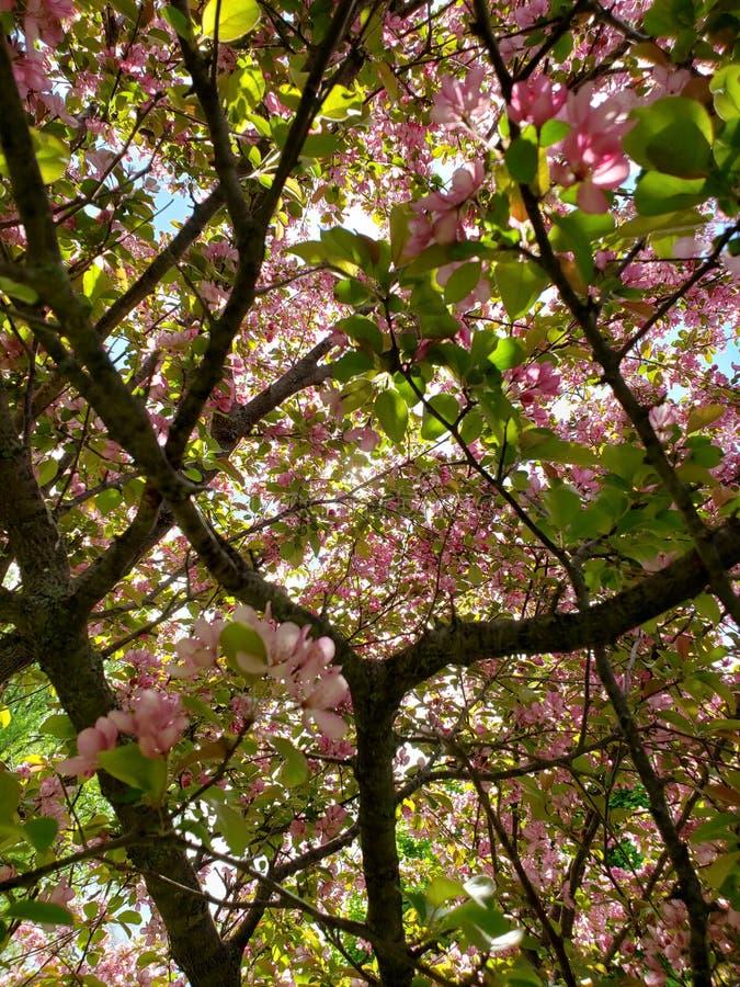 Цветене весны в дереве стоковое изображение rf