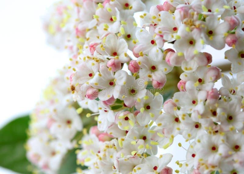 Цветене весны стоковая фотография