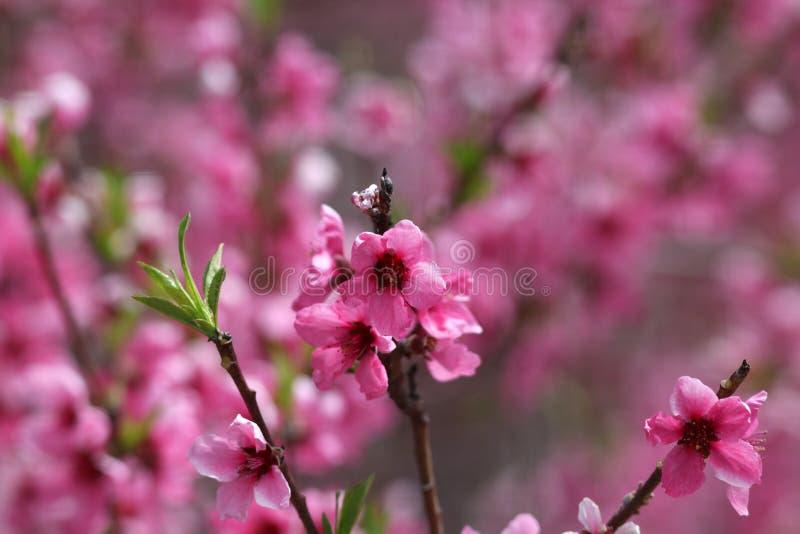 Цветене весны стоковая фотография rf