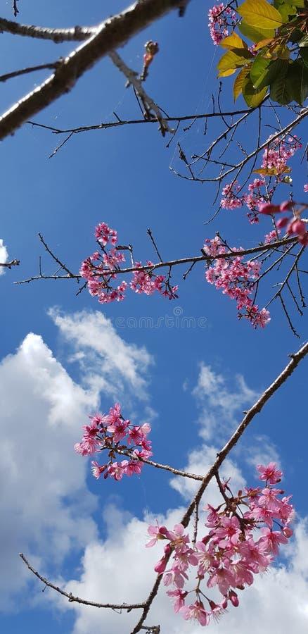 Цветене в небе стоковое изображение rf