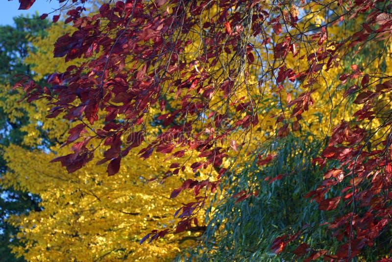 цветене осени полное стоковая фотография rf