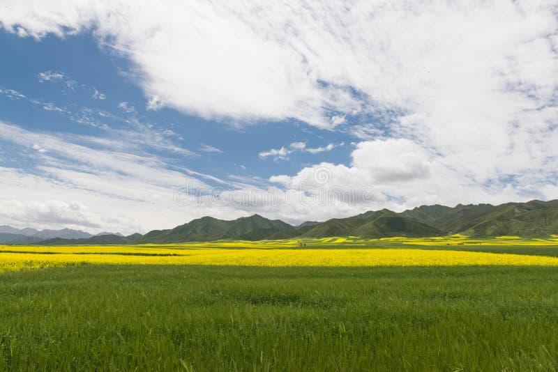 Цветене рапса и сочных гор и barl гористой местности стоковые фотографии rf