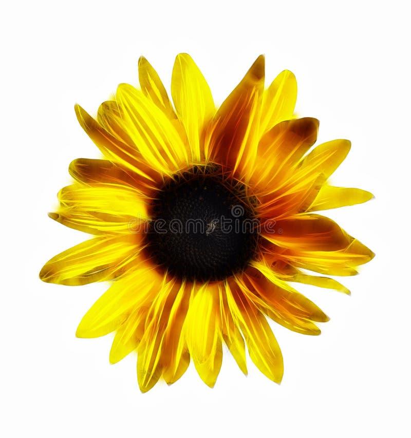 Цветене солнцецвета бесплатная иллюстрация