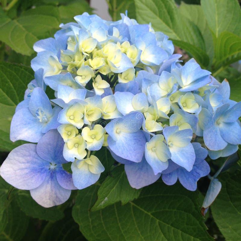 Цветене цветений во времени весны в апреле стоковые изображения rf