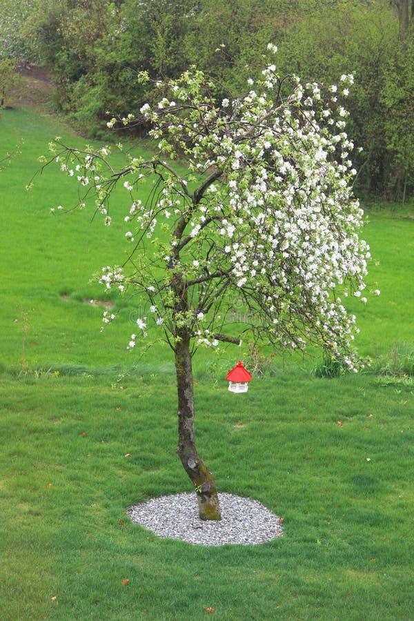 Цветене яблони полностью стоковое изображение rf