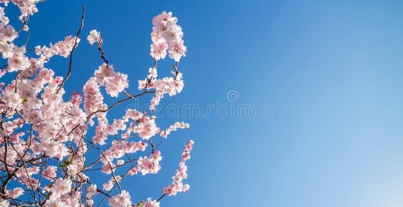 Цветение весны против темносинего неба стоковые изображения