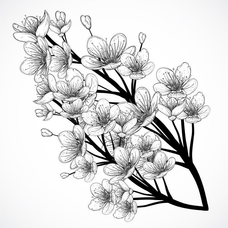 Цветение вишневого дерева Винтажной черно-белой нарисованная рукой иллюстрация вектора в стиле эскиза иллюстрация вектора