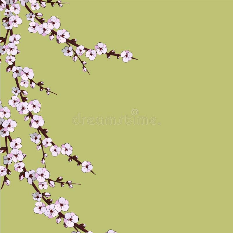 Цветение вишни Цветки Sakura вектор детального чертежа предпосылки флористический бесплатная иллюстрация