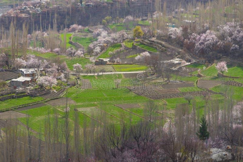 Цветение в долине Hunza, Karimabad, Gilgit Baltistan, Пакистане стоковые фото