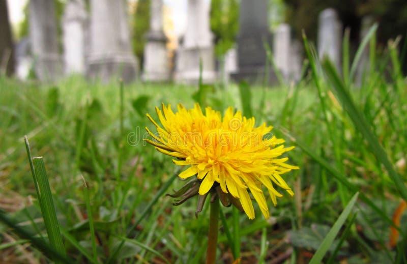 Цветение в саде смерти стоковая фотография