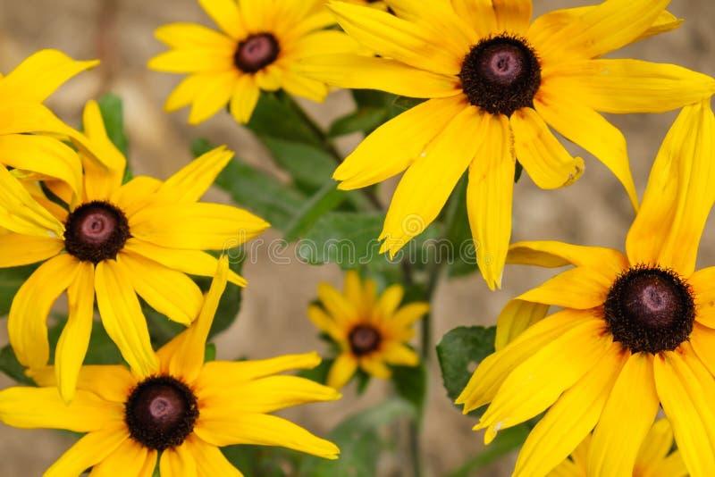 Цветение красивой красоты предпосылки зацветая флористическо стоковая фотография