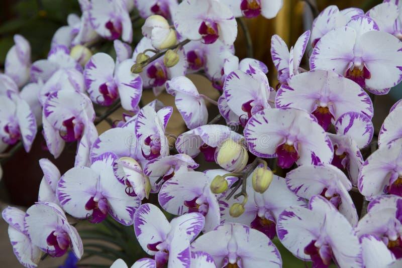 Цветение орхидей стоковое фото rf