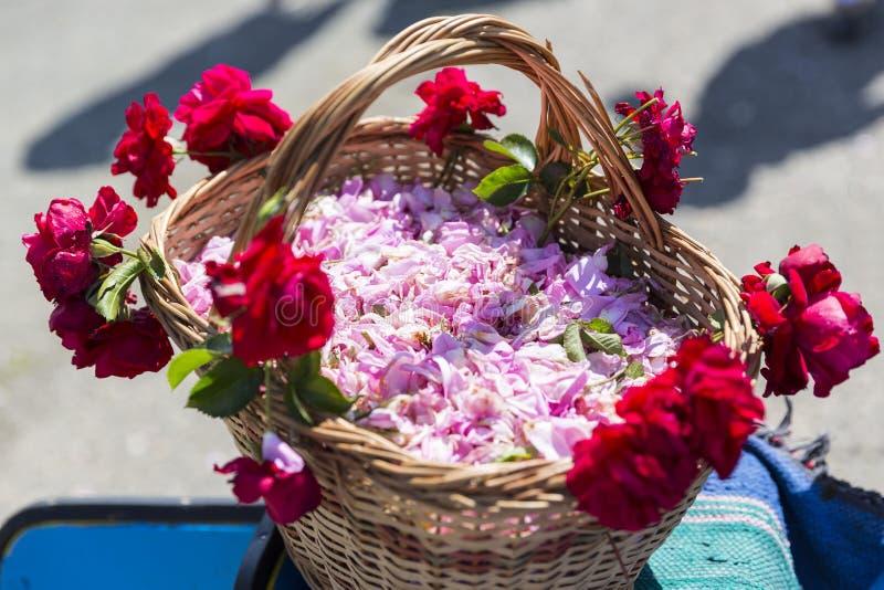Цветение розы пинка в корзине стоковые фотографии rf