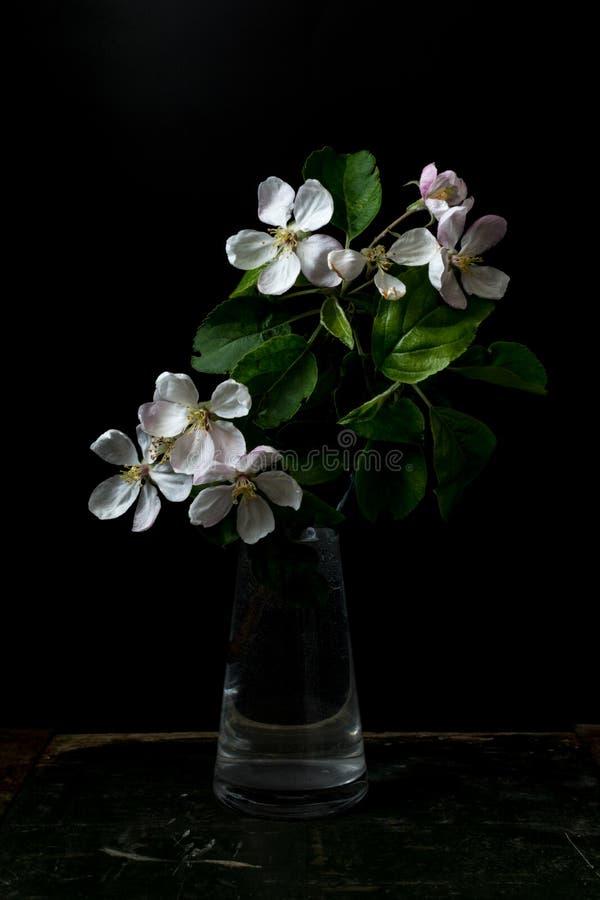 Цветение цветет в вазе изолированной на черной предпосылке стоковое изображение