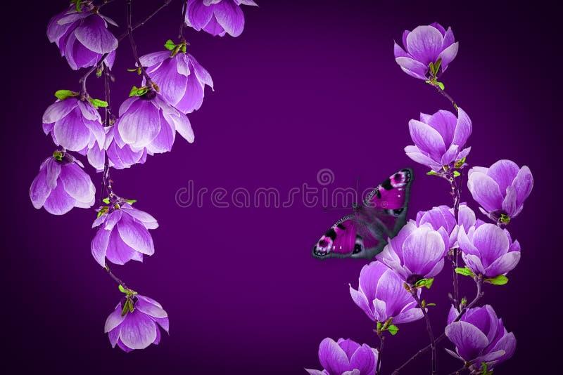 Цветение цветка магнолии изолированное на черноте стоковые фото